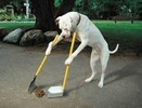 Thumbnail Dog Training Techniques With PLR